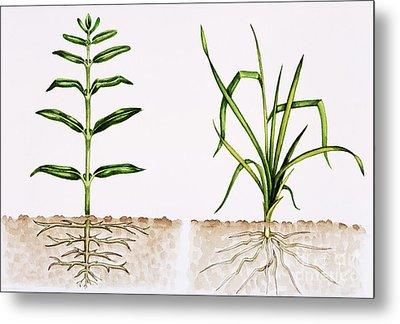 Plant Comparison Metal Print by Lizzie Harper