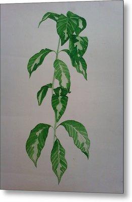 Plant Metal Print by Shilpa V N