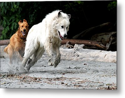Play Time On The Beach Metal Print