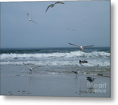 Playful Gulls Metal Print by Laurence Oliver
