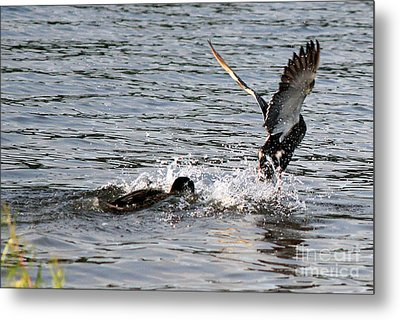 Metal Print featuring the photograph Playing Chase by Kathy  White