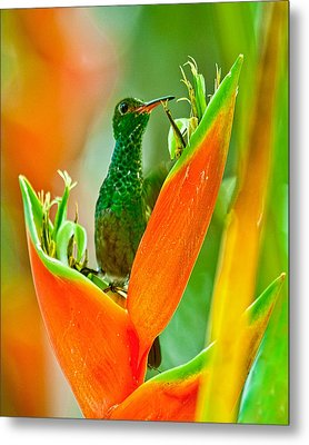 Metal Print featuring the photograph Plenty Of Nectar by Susi Stroud