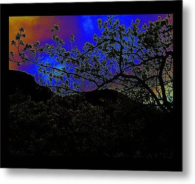 Metal Print featuring the photograph Plum Grove At Dusk by Susanne Still