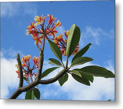 Metal Print featuring the photograph Plumeria Greet The Sun by Craig Wood