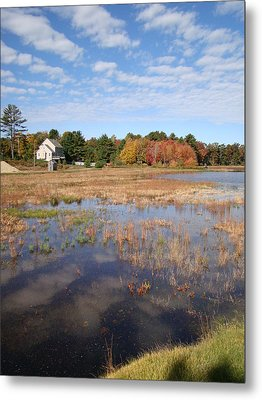 Plymouth Cranberry Bog Metal Print by Mark Haley
