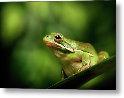 Poised Metal Print by MarkBridger