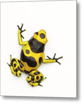 Poison Dart Frog Metal Print