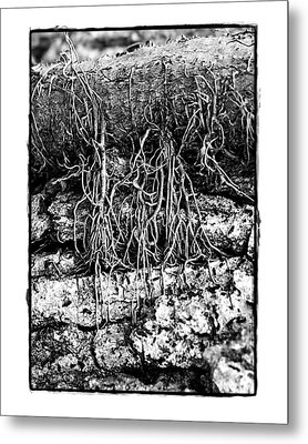 Metal Print featuring the photograph Poison Ivy Roots by Judi Bagwell