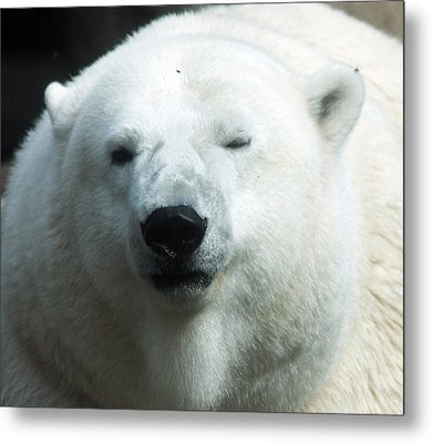 Metal Print featuring the photograph Polar Bear - 0001 by S and S Photo