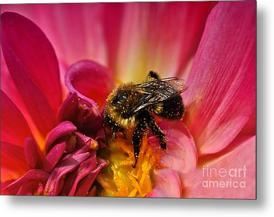 Pollen Covered  Metal Print