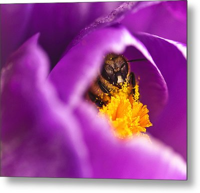 Pollination Party Of One Metal Print by Vicki Jauron