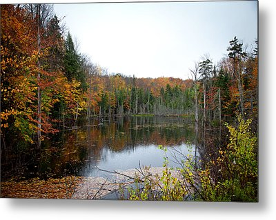 Pond On Limekiln Road In Inlet New York Metal Print by David Patterson