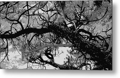 Metal Print featuring the photograph Ponderosa Pine by Rosemarie Hakim