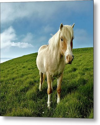 Pony On Mykines Metal Print by © Rune S. Johnsson