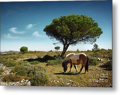 Pony Pasturing Metal Print by Carlos Caetano