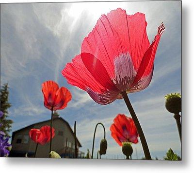 Poppies And Sky Metal Print by Robert Meyers-Lussier