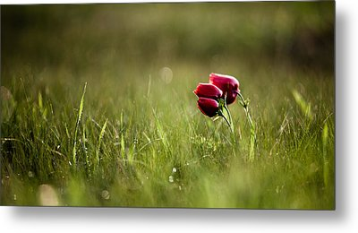 Popping Red Metal Print by Victor Bezrukov