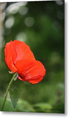 Metal Print featuring the photograph Poppy Dreams by Penny Hunt