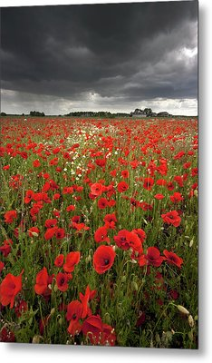 Poppy Field With Stormy Sky In Background Metal Print by Chris Conway