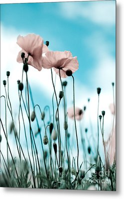 Poppy Flowers 09 Metal Print by Nailia Schwarz