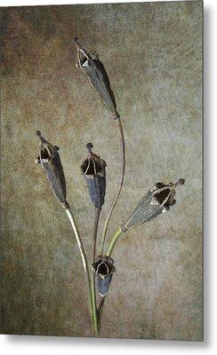 Poppy Seed Cases Metal Print by Debra Kelday
