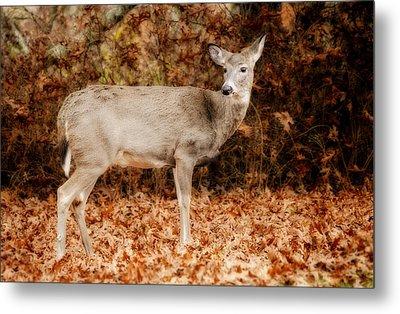 Portrait Of A Deer Metal Print by Kathy Jennings