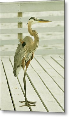 Portrait Of A Heron Metal Print by Rick Frost