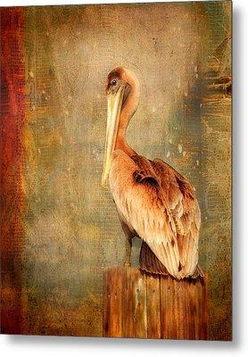 Portrait Of A Pelican Metal Print by Karen Lynch