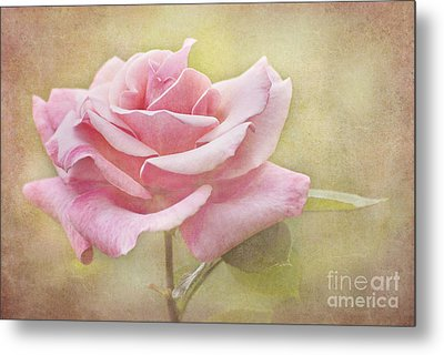 Portrait Of A Rose Metal Print