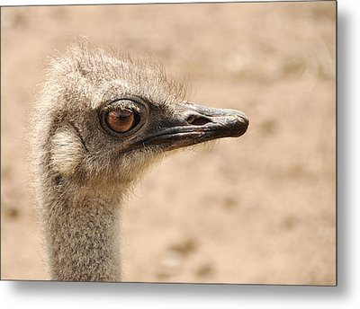 Portrait Of An  Ostrich Metal Print