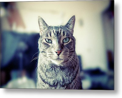 Portrait Of Cat Metal Print by William Andrew