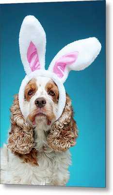 Portrait Of Dog Wearing Easter Bunny Ears Metal Print by Jade Brookbank