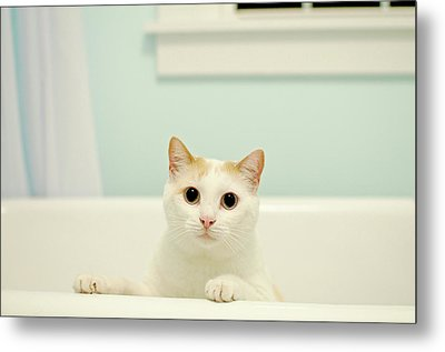 Portrait Of White Cat Metal Print by Melissa Ross