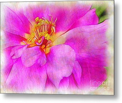 Portulaca With Texture Metal Print by Judi Bagwell