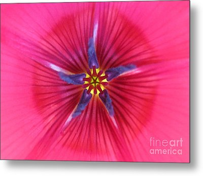 Potential Photography Metal Print by Tina Marie
