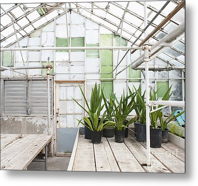 Potted Plants In A Greenhouse Metal Print by Thom Gourley/Flatbread Images, LLC