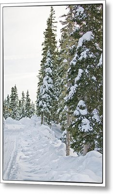 Powdery Snow Path Metal Print by Lisa  Spencer