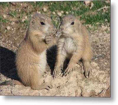 Prairie Dog Duo Metal Print by Michelle H