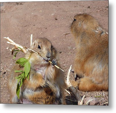 Prairie Dogs Metal Print by Methune Hively