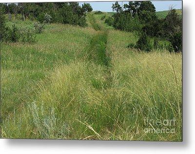Prairie Trail In High Grass Metal Print by Jim Sauchyn