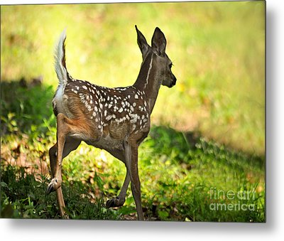 Metal Print featuring the photograph Prancing Fawn by Nava Thompson