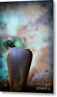 Praying For Water 1 Metal Print by Andee Design