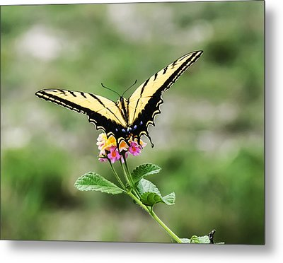Prepare For Take Off Metal Print by Kelly Rader