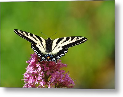 Metal Print featuring the photograph Preparing For Take-off by Ronda Broatch
