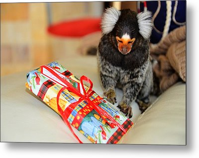 Present Time Chewy The Marmoset Metal Print by Barry R Jones Jr