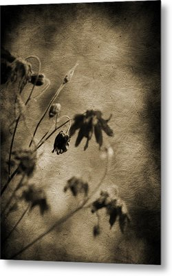 Preserved Dreams Metal Print by Terrie Taylor