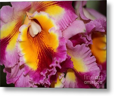 Pretty And Colorful Orchids Metal Print by Sabrina L Ryan
