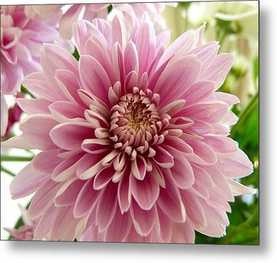 Pretty In Pink Metal Print by Karen Grist