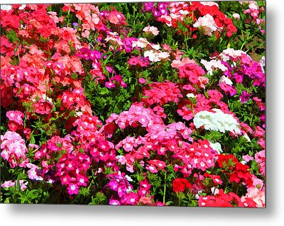 Metal Print featuring the photograph Pretty In Pink by Paul Svensen