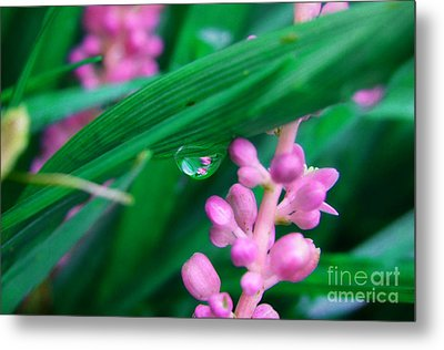Pretty In Pink  Metal Print by Peggy Franz